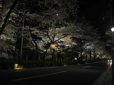 Gojyotakasegawayozakura