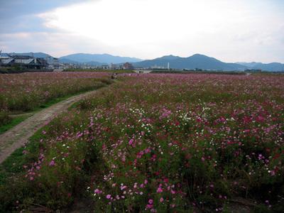 Kameokakosumosu1