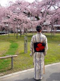 Kimonosakura