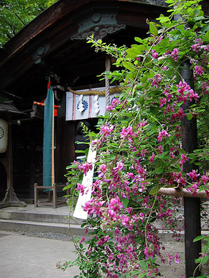 Nasinokijinjya2006hagi