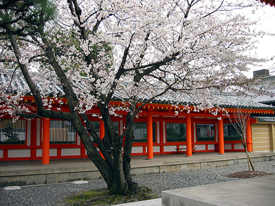 Sanjyusangendosakura1