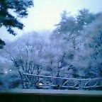 三月の雪。