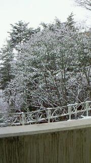 雪ですね。