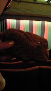 歌舞伎座、おやつ