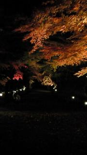 胡宮神社、ライトアップ