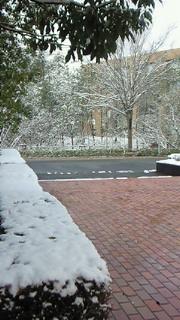 雪でした。