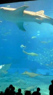 美ら海水族館!