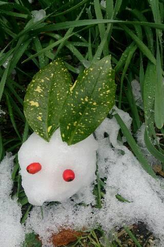 岡山も雪!
