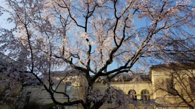 旧府庁、本満寺