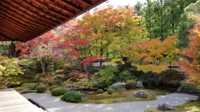 京都紅葉便り2018、泉涌寺、今熊野観音寺